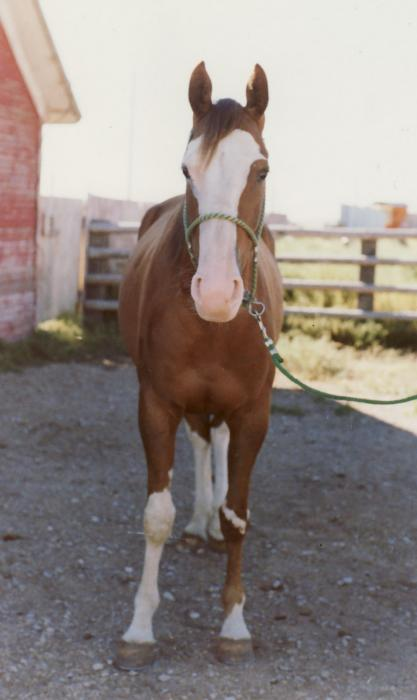 Sorrel Mare from the Front
