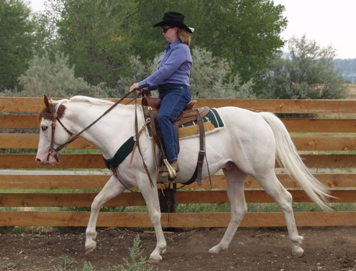 """Dee"" Under Saddle"